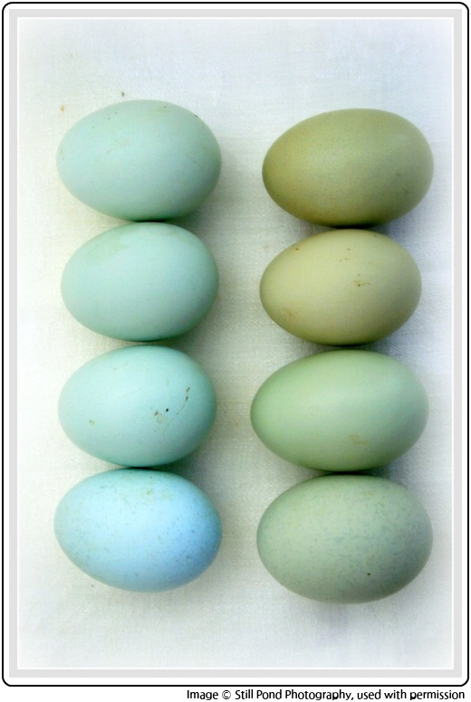 Still Pond Photography's image of green and blue eggs, inspiration for SpaceCadet Creations yarn for knitting and crochet